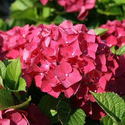 Декоративные и цветущие многолетние растения