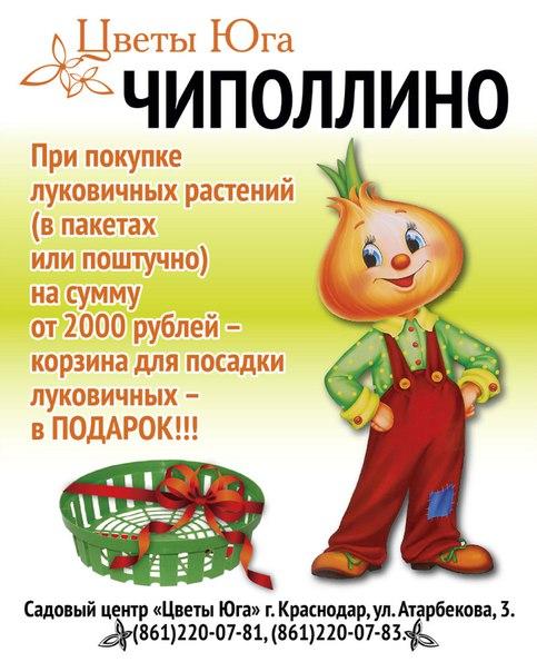 Интернет Магазин Чиполлино В Оренбурге